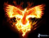 phoenixoiseazmx.jpg
