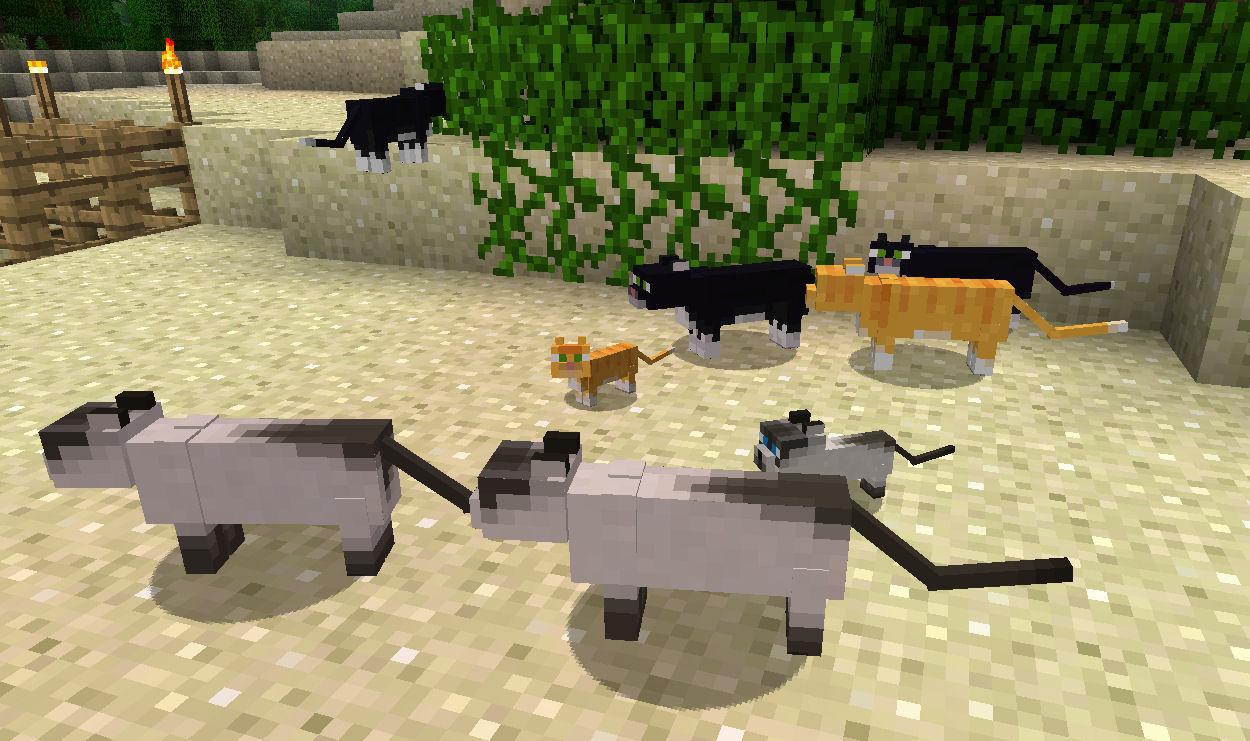 Картинки котов в майнкрафт